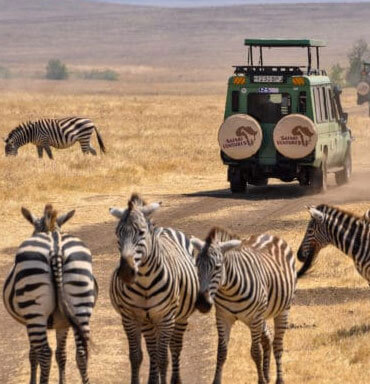 African Safaris