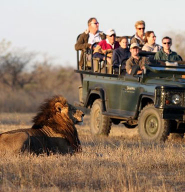 Safari Vacations